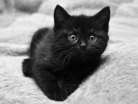 youngcat
