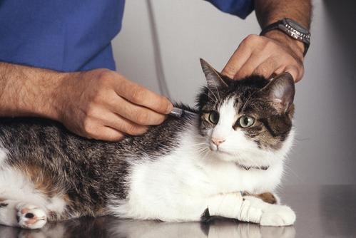 cat_vaccination